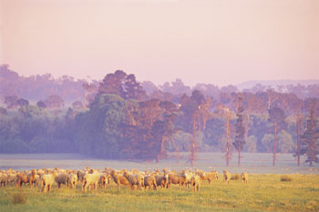 New South Wales sheepfarming at gostwyck | Credits BS01V-NSWTourism